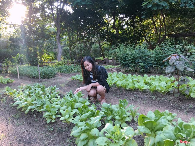 Vườn rau
