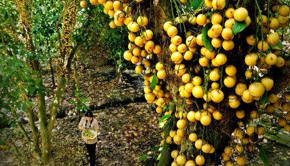 Vườn Trái Cây Chú Ba Cư
