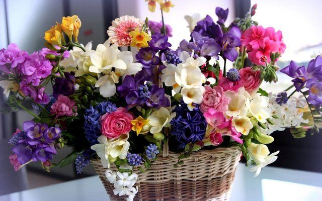 Florist Saigon - Shop Hoa Online
