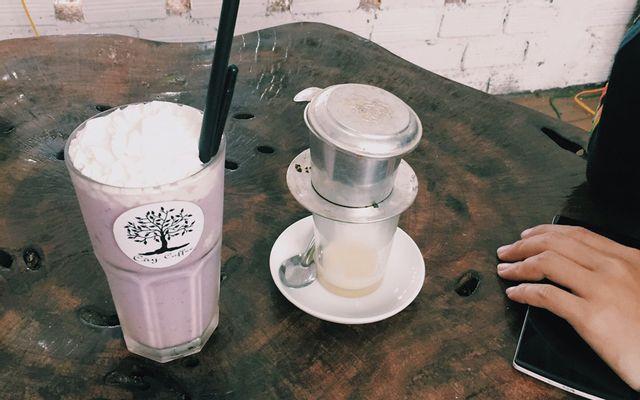 Cây Coffee