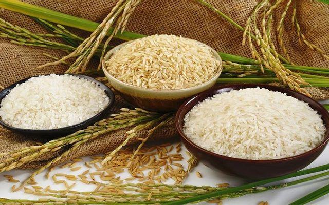 Nông Sản Gia Phú - Đặc Sản Gạo Và Ngũ Cốc