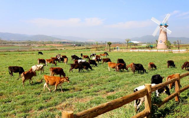 Vinamilk Organic Farm Đà Lạt