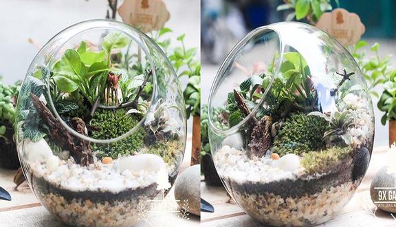 Cây Cảnh Mini 9X Garden - Tiểu Cảnh Để Bàn