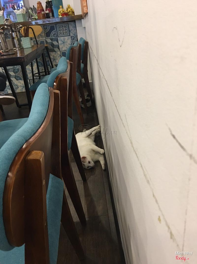Hai chú mèo rất thân thiện nha