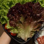 Rau rất tươi,  ngoài ra có cả nhiều loại salad dùng kèm thịt nướng thì hết sảy nhé