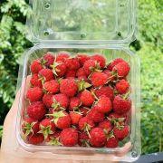 Raspberry 80k/hộp
