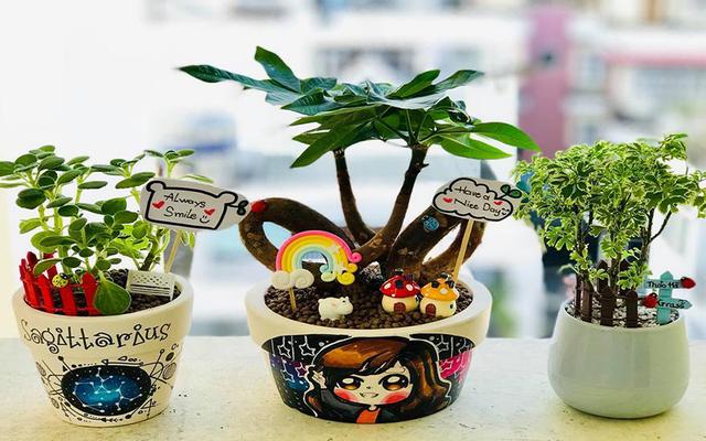 Joy Garden - Cây Và Chậu Quà Tặng