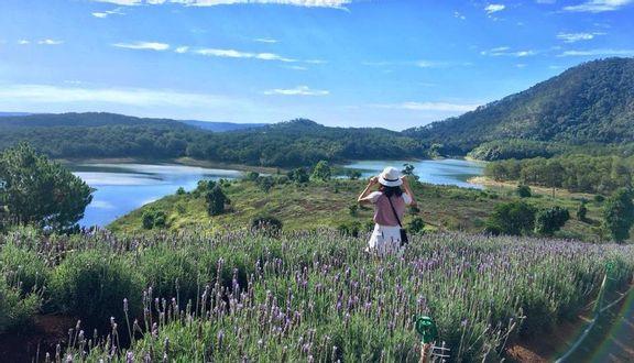 Cánh Đồng Lavender - Hồ Tuyền Lâm