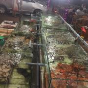 Toàn những hải sản đặt sản