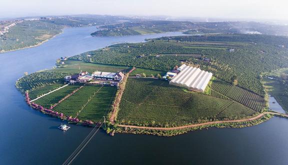 Long Đỉnh Organic Tea - Farm & Resort