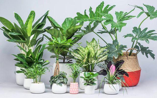 Lá Concept - Green Your Home - Đường Láng