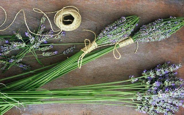 Lavender Shop - Oải Hương