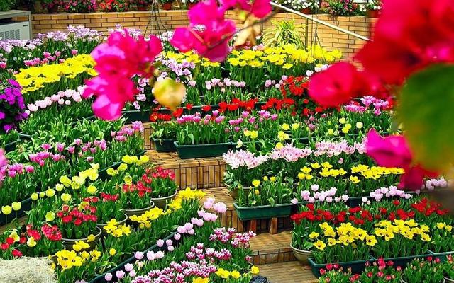 ABC Garden - Hạt Giống Hoa Quả