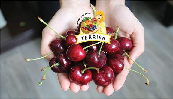 TERRISA Premium Store - Lý Tự Trọng