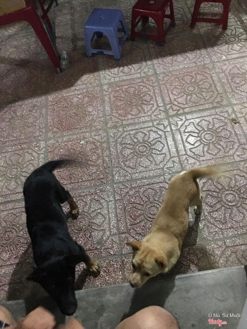 Những chú chó dễ thương ở nn Biển Xanh