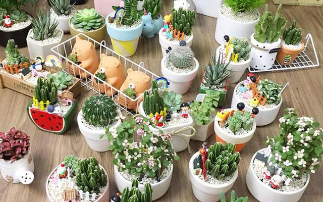 Miu Garden - Cây Cảnh Trang Trí Mini