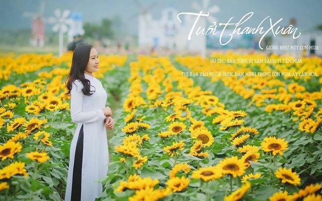 Phim Trường Cánh Đồng Hoa Discovery Land