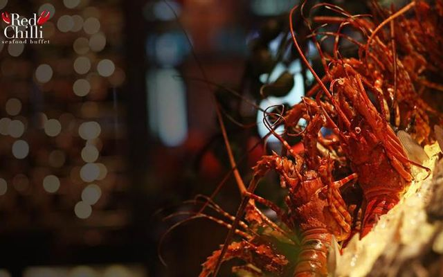 Red Chilli Seafood Buffet - Chloe Gallery
