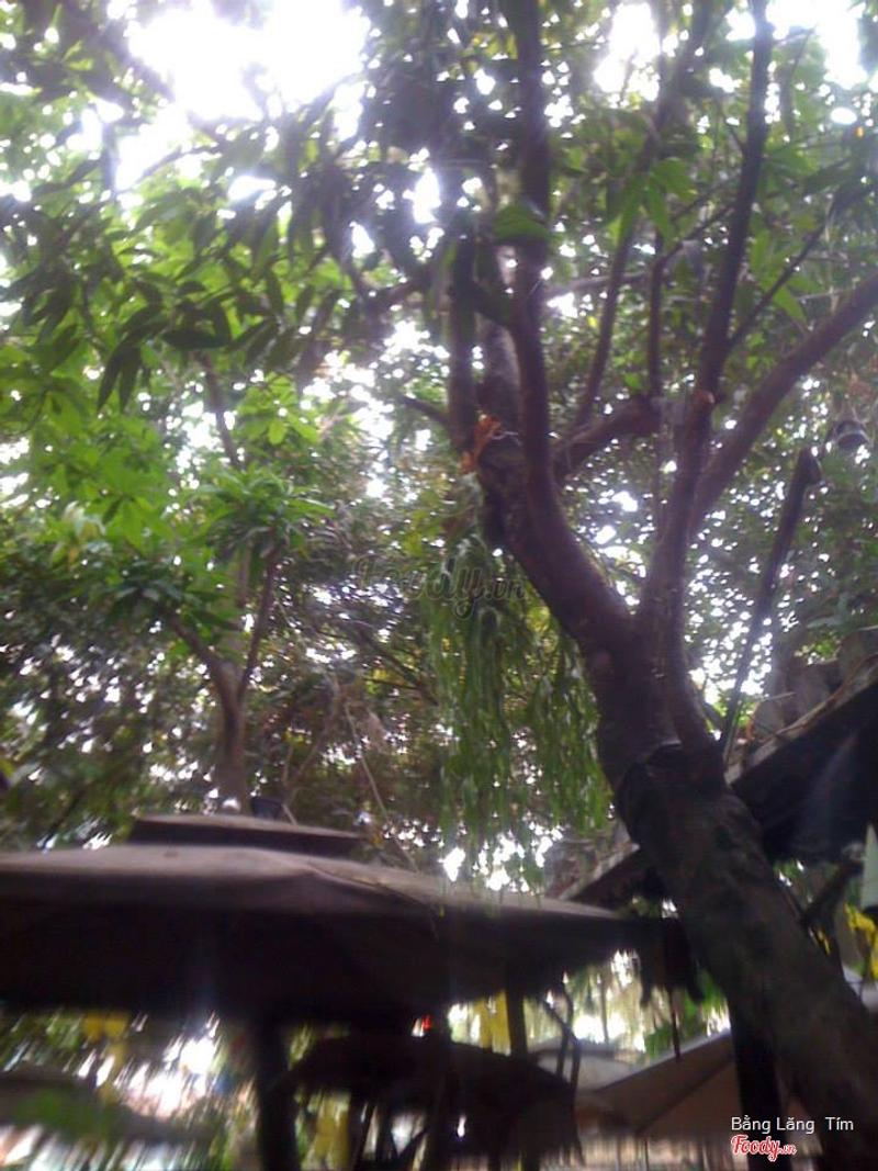 Tán cây trong khuôn viên quán