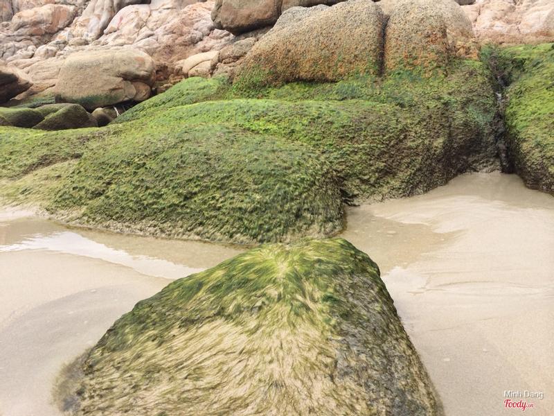 Hòn đá mọc rêu ở bãi tiên