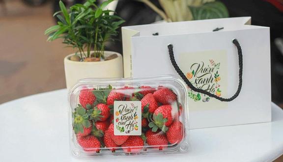 Fruit Party - Vườn Xanh Của Hạ - Phan Đình Phùng