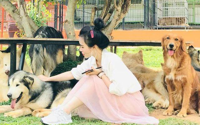Puppy Farm - Nông Trại Cún