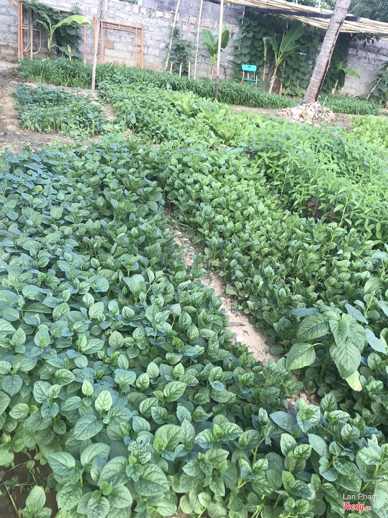 Vườn rau sạch tại nhà hàng