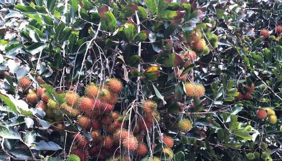 Vườn Trái Cây Bảy Triều