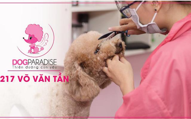 DogParadise - Cửa Hàng Thú Cưng - Võ Văn Tần