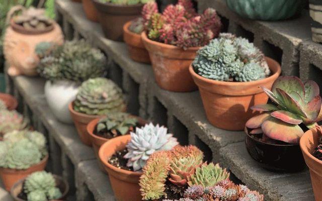 Vườn Sen - Succulents & Coffee