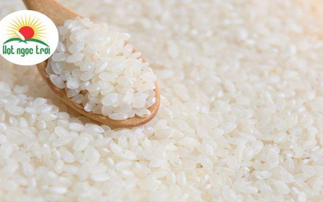 Vua Gạo - Gạo Hạt Ngọc Trời - Văn Chung