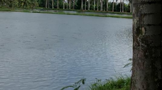 11/6/2018, chuyến đi Cồn Sơn tuyệt vời, cù lao giữa sông Hậu